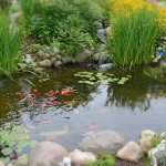 goldfish pond and gardens