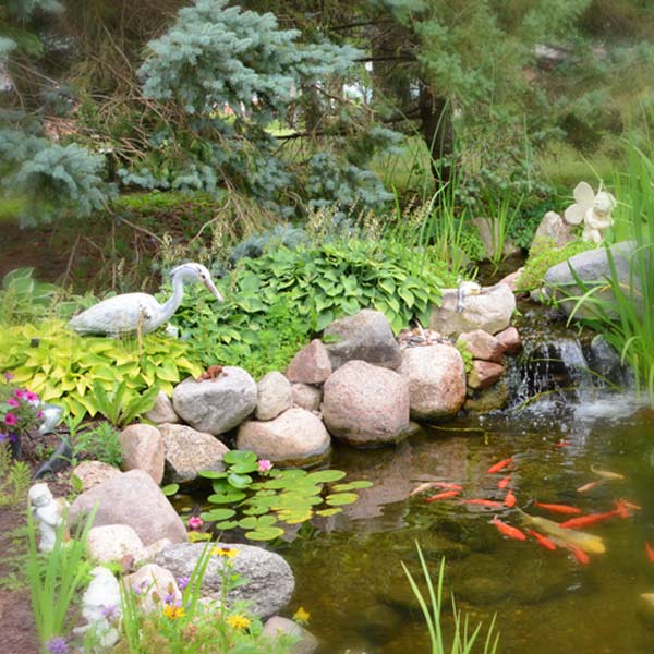 Cloran Mansion goldfish pond