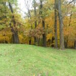 Yellow fall foliage dominates trees